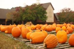 CFPC Pumpkin Patch - low res