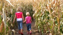 Copper Creek Corn Maze - istock