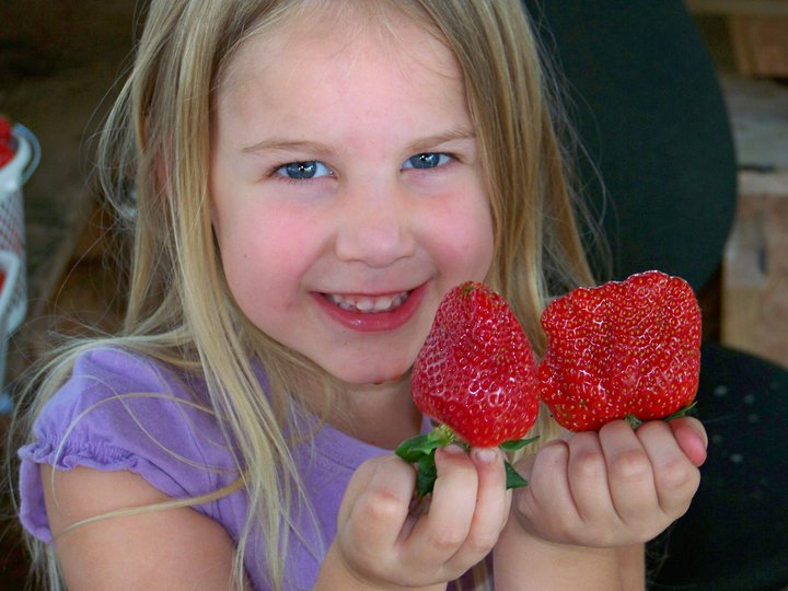 Payne Farm - girl with strawberries